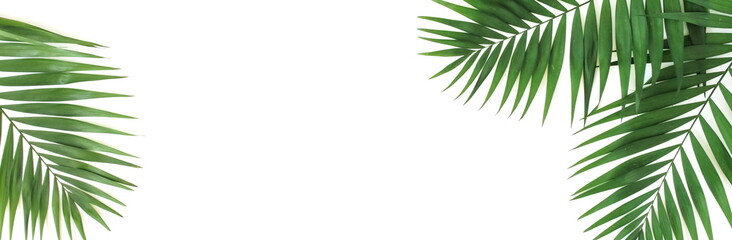 tropical green palm leaves , branches pattern isolated on a white background. banner. top view.copy space.abstract.