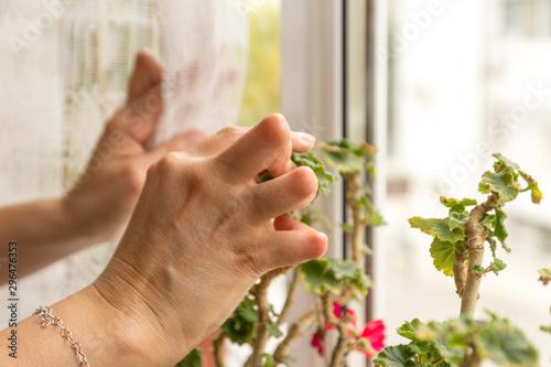 Young woman having rheumatoid arthritis looking at her flowers on the window Fototapeta