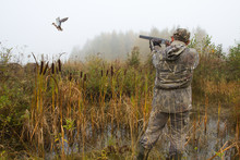 The Hunter Aims At A Duck That Has Risen From A Thicket Of Reeds