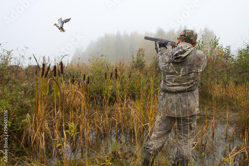 Fotografia the hunter aims at a duck that has risen from a thicket of reeds