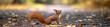 canvas print picture - lustiges Eichhörnchen im Park