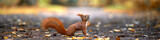 Fototapeta Zwierzęta - lustiges Eichhörnchen im Park