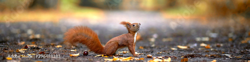 Photo sur Toile Squirrel lustiges Eichhörnchen im Park