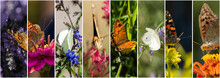Collage Of Butterfly Photos 8 ...