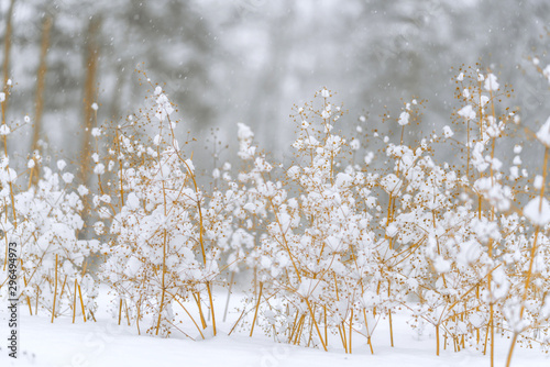 The dried grass is covered with fluffy snow Wallpaper Mural