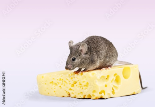 Cadres-photo bureau Fleur Mouse trap with cheese and mouse on background