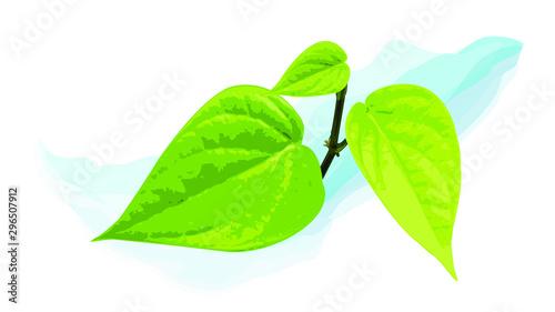 green betel leaf vector realistic draft  cutout nature asia Canvas Print