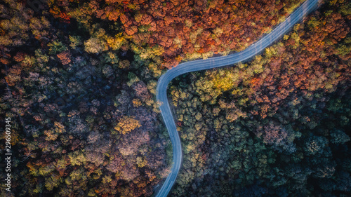 Fotomural  Overhead Aerial Shoot of road through colorful  forest