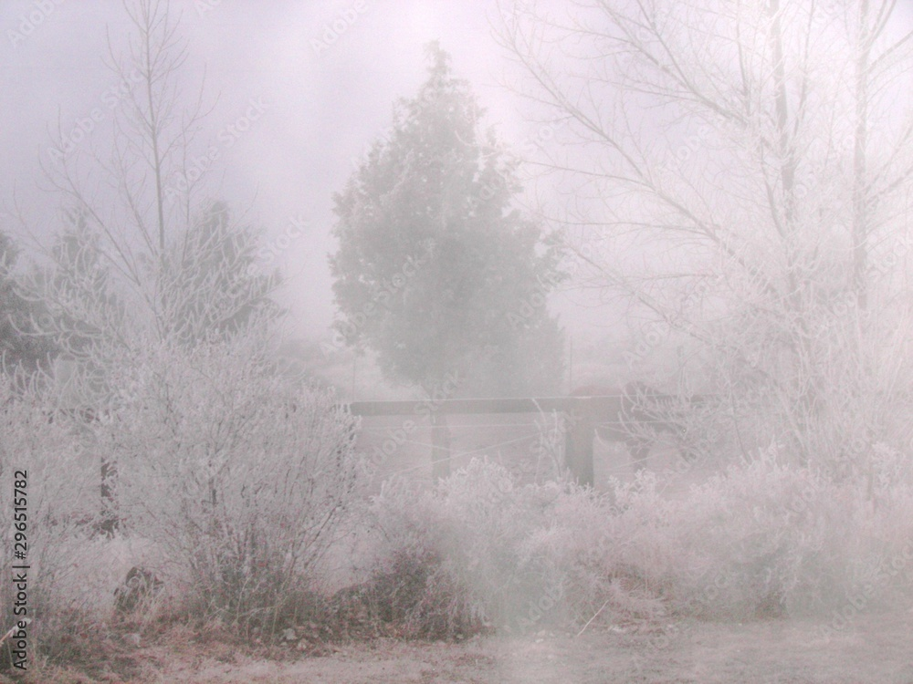Fototapeta winter, tree, snow, landscape, fog, nature, forest, cold, trees, white, frost, mist, field, season, ice, road, foggy, sky, frozen, snowy, autumn, wood, scene, lake, countryside