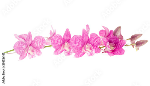 Cuadros en Lienzo pink orchid flowers isolated on white background