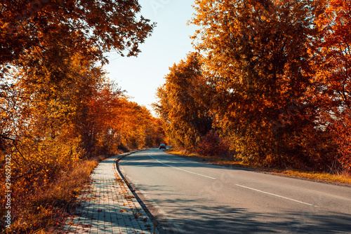 Garden Poster Brown Asphalt curvy road with car and fallen leaves in autumn forest. Autumnal background