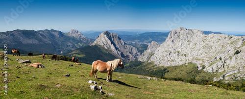 Photo Vista panorámica con caballos salvajes desde la cima de la montaña en el Parque