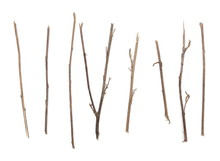 Dry Branches, Twigs Set And Co...