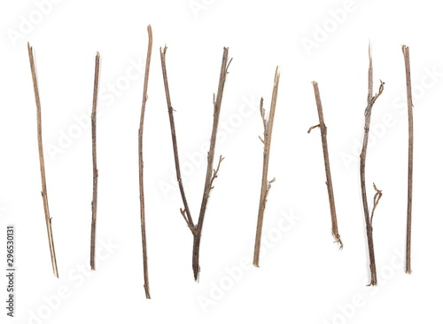 Fotografia Dry branches, twigs set and collection isolated on white background