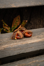 Chestnut Fruits With Peel Spikes. The Skin Is Brown. Chestnuts Fresh Glossy. Are On An Old Wooden Bench In The Park. In The Background Are Dry Chestnut Leaves. Vertical Orientation. Warm Tone