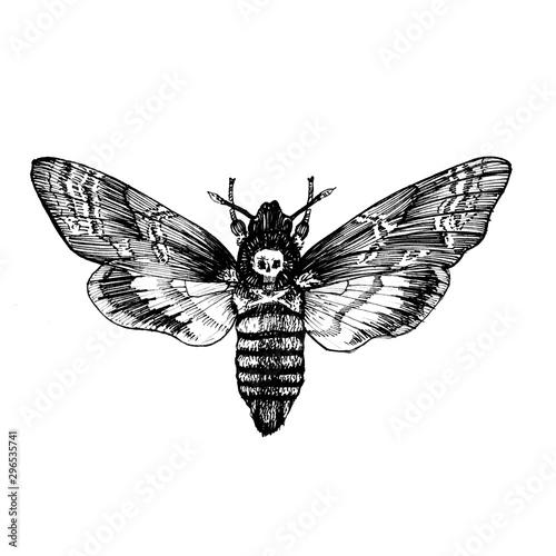 Photo Butterfly Acherontia atropos , dead head, adam's head