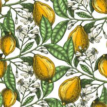 Hand Drawn Citrus Fruits Backd...