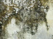 Mold On Concrete Wall Texture
