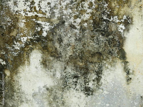 Obraz na plátne mold on concrete wall texture