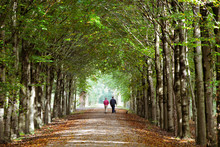 People Walking In The Autumn F...