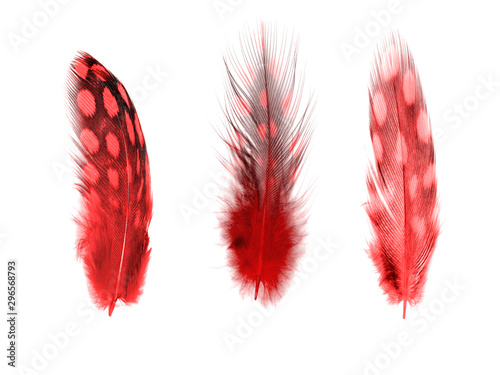 set of red color feathers isolated on white Wallpaper Mural