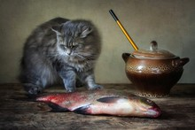 Still Life With  Bream  Fish And Funny Kitty
