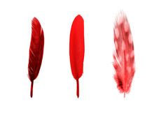 Set Of Red Color Feathers Isolated On White