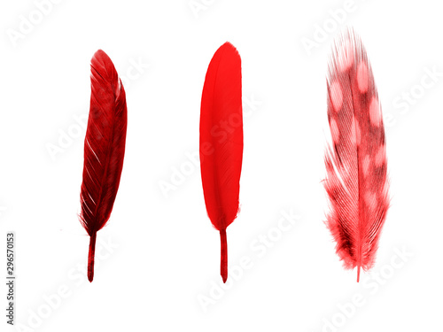 set of red color feathers isolated on white Canvas Print