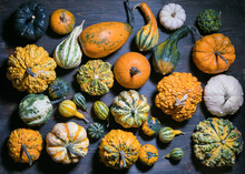 Many Types Of Pumpkin And Squash