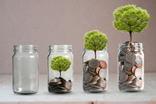 Money Coins And Tree Growing In Jar. Profit On Deposit In Bank And Dividend For Stock Investment Concept.