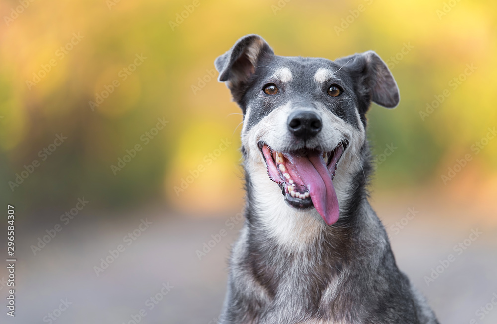 Closeup photo of an adorable dog. <span>plik: #296584307 | autor: SasaStock</span>