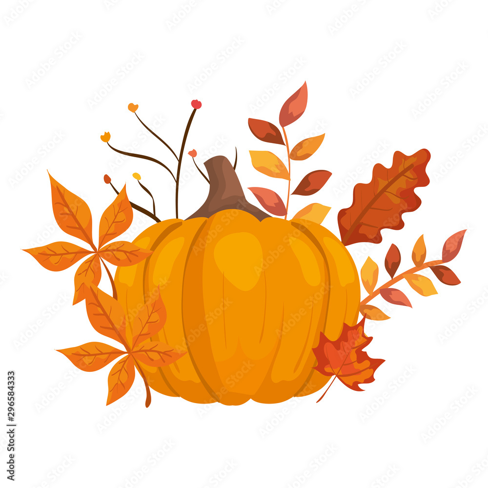 Fototapety, obrazy: autumn pumpkin with leafs isolated icon vector illustration design