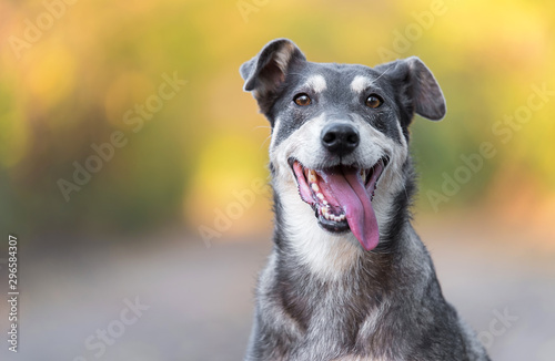 Obraz Closeup photo of an adorable dog. - fototapety do salonu
