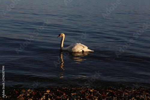 Photo aves varias