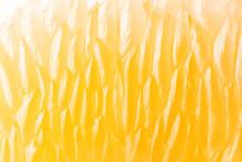 Bright Juicy Citrus Pulp Close...