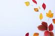 Leinwandbild Motiv autumn composition, autumn leaves