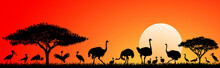 Birds Of The Savannah.Wild Birds Of The African Savannah Against The Sky And The Sun. Silhouettes Of Different Birds. Wildlife Of Africa. Sunset In The Savannah