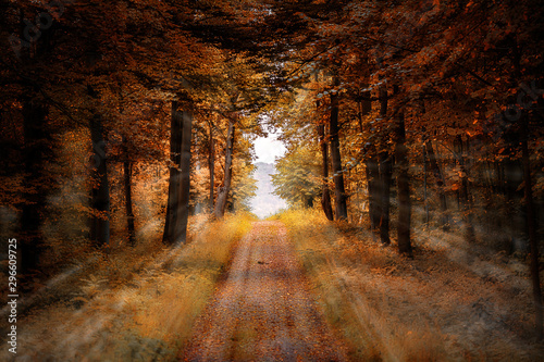Poster Route dans la forêt Sunrays from a forest clearing into an orange autumn forest with a straight path