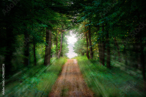 Sunrays from a forest clearing into a green forest with a straight path