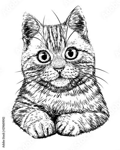 Cat. Graphic, hand-drawn, black and white sketch of a cat on a white background.