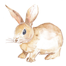 Cute Bunny Watercolor Painted