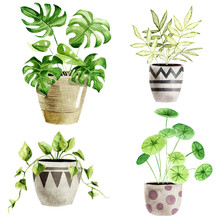 Watercolor Houseplants Isolated On White Background. Best For Scrapbooking, Interior Sketching, Wallpaper, Prints, Fabric Design, Textile, Posters. Hand Painted Illustration. Trendy Greenery