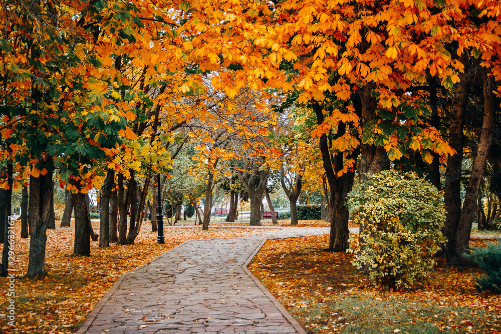 Fototapety, obrazy: Autumn scenery with road, gold foliage