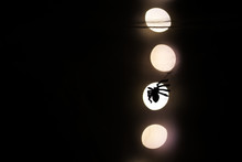 Close-up Silhouette Of Spider On Web, Dark Background With Bokeh.