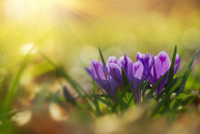 Fairytale Sunlight On Spring F...