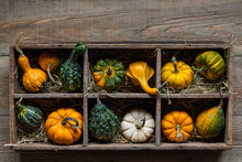 Colorful Decorative Gourds In A Wood Storage Box On A Rustic Farm Wood Planks Background