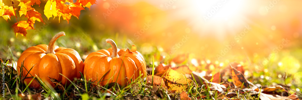 Banner Of  Two Mini Pumpkins And Leaves In Grass At Sunset - Thanksgiving/Autumn