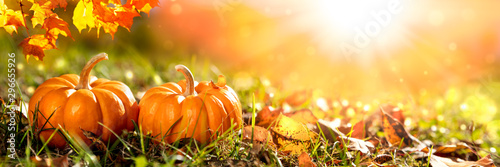 Fotobehang Herfst Banner Of Two Mini Pumpkins And Leaves In Grass At Sunset - Thanksgiving/Autumn