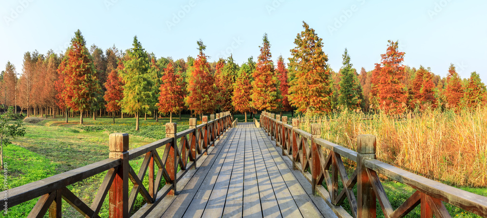 Fototapety, obrazy: Wood road and beautiful colorful forest landscape in autumn