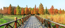 Wood Road And Beautiful Colorful Forest Landscape In Autumn